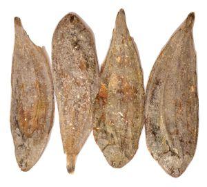 Flatfish 5 x 150g