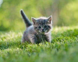 Pienso seco para gatos